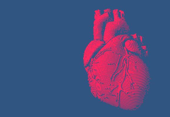Das Herz – Der Motor unseres Körpers